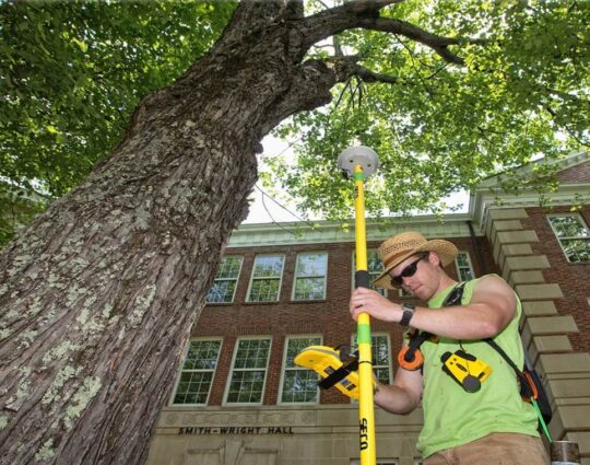Arborist Consultations-Henderson Tree Trimming and Tree Removal Services-We Offer Tree Trimming Services, Tree Removal, Tree Pruning, Tree Cutting, Residential and Commercial Tree Trimming Services, Storm Damage, Emergency Tree Removal, Land Clearing, Tree Companies, Tree Care Service, Stump Grinding, and we're the Best Tree Trimming Company Near You Guaranteed!