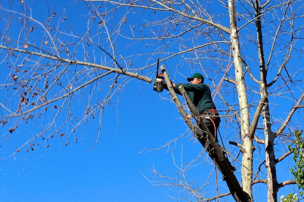 Contact Us-Henderson Tree Trimming and Tree Removal Services-We Offer Tree Trimming Services, Tree Removal, Tree Pruning, Tree Cutting, Residential and Commercial Tree Trimming Services, Storm Damage, Emergency Tree Removal, Land Clearing, Tree Companies, Tree Care Service, Stump Grinding, and we're the Best Tree Trimming Company Near You Guaranteed!