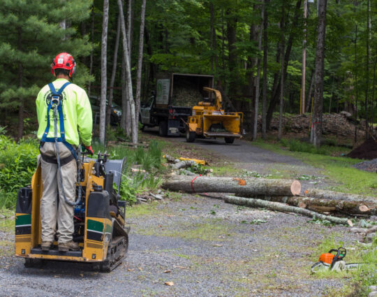 Emergency Tree Removal-Henderson Tree Trimming and Tree Removal Services-We Offer Tree Trimming Services, Tree Removal, Tree Pruning, Tree Cutting, Residential and Commercial Tree Trimming Services, Storm Damage, Emergency Tree Removal, Land Clearing, Tree Companies, Tree Care Service, Stump Grinding, and we're the Best Tree Trimming Company Near You Guaranteed!