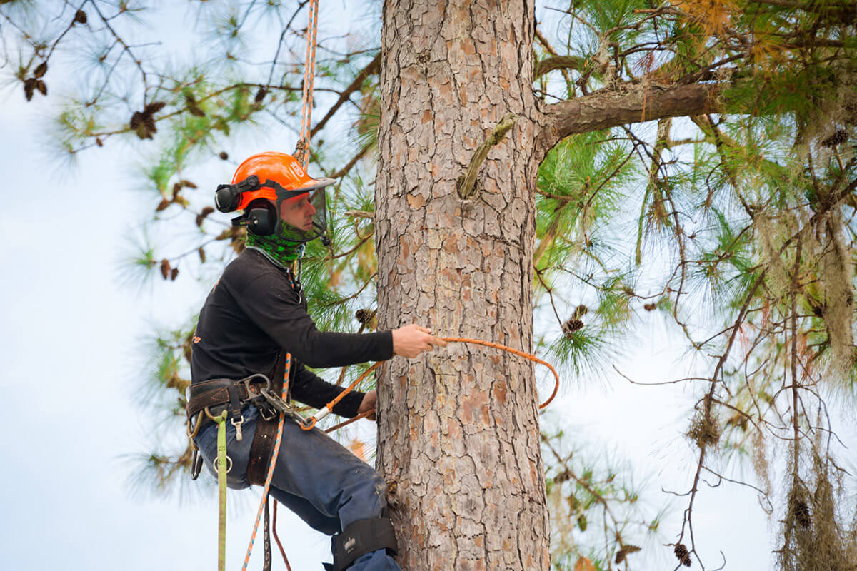 Henderson Tree Trimming and Tree Removal Services Home Page Image-We Offer Tree Trimming Services, Tree Removal, Tree Pruning, Tree Cutting, Residential and Commercial Tree Trimming Services, Storm Damage, Emergency Tree Removal, Land Clearing, Tree Companies, Tree Care Service, Stump Grinding, and we're the Best Tree Trimming Company Near You Guaranteed!