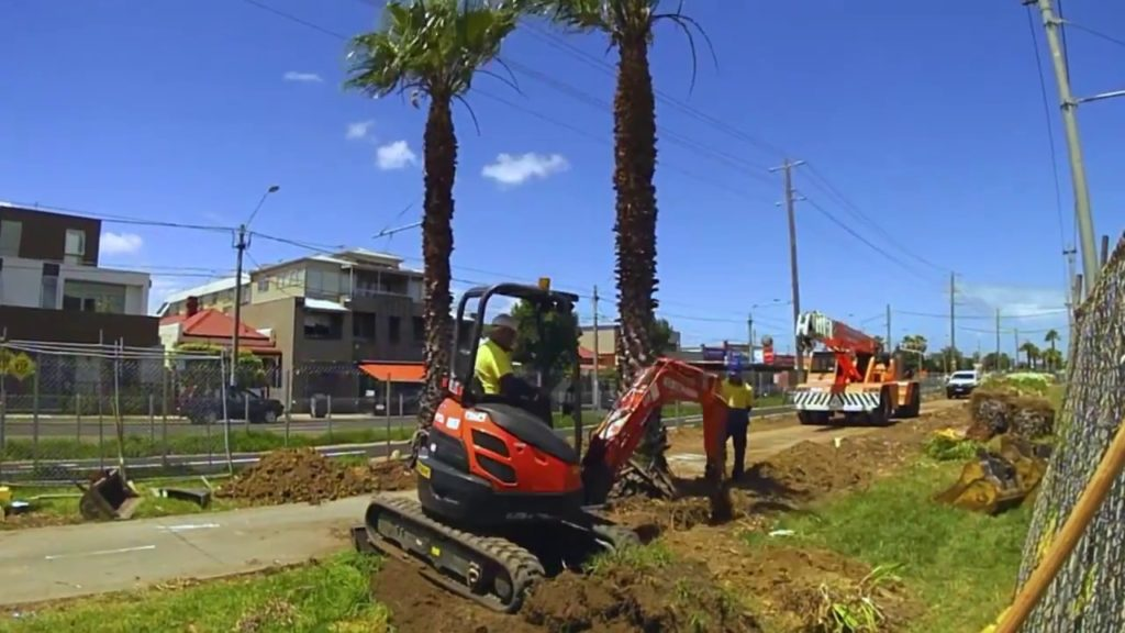 Palm Tree Removal-Henderson Tree Trimming and Tree Removal Services-We Offer Tree Trimming Services, Tree Removal, Tree Pruning, Tree Cutting, Residential and Commercial Tree Trimming Services, Storm Damage, Emergency Tree Removal, Land Clearing, Tree Companies, Tree Care Service, Stump Grinding, and we're the Best Tree Trimming Company Near You Guaranteed!