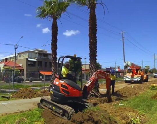 Palm Tree Trimming and Removal-Henderson Tree Trimming and Tree Removal Services-We Offer Tree Trimming Services, Tree Removal, Tree Pruning, Tree Cutting, Residential and Commercial Tree Trimming Services, Storm Damage, Emergency Tree Removal, Land Clearing, Tree Companies, Tree Care Service, Stump Grinding, and we're the Best Tree Trimming Company Near You Guaranteed!