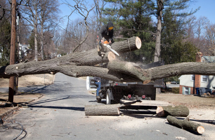 Residential Tree Services-Henderson Tree Trimming and Tree Removal Services-We Offer Tree Trimming Services, Tree Removal, Tree Pruning, Tree Cutting, Residential and Commercial Tree Trimming Services, Storm Damage, Emergency Tree Removal, Land Clearing, Tree Companies, Tree Care Service, Stump Grinding, and we're the Best Tree Trimming Company Near You Guaranteed!
