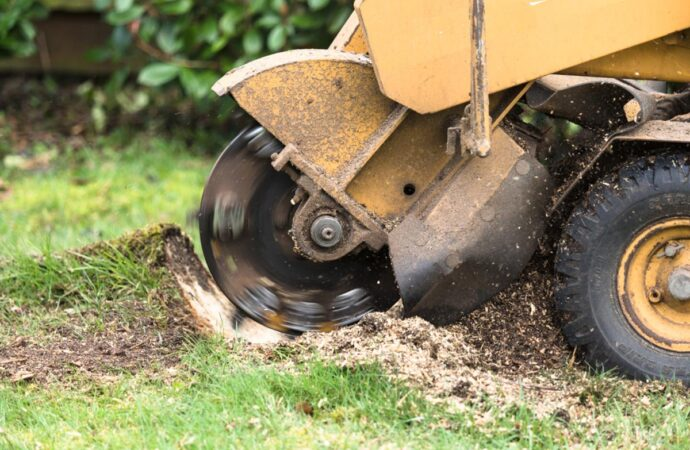 Stump Grinding-Henderson Tree Trimming and Tree Removal Services-We Offer Tree Trimming Services, Tree Removal, Tree Pruning, Tree Cutting, Residential and Commercial Tree Trimming Services, Storm Damage, Emergency Tree Removal, Land Clearing, Tree Companies, Tree Care Service, Stump Grinding, and we're the Best Tree Trimming Company Near You Guaranteed!