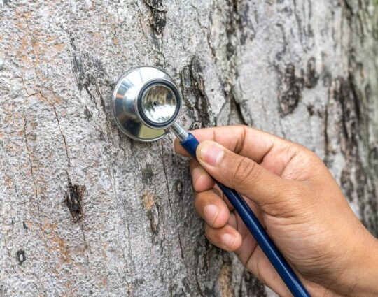 Tree Assessments-Henderson Tree Trimming and Tree Removal Services-We Offer Tree Trimming Services, Tree Removal, Tree Pruning, Tree Cutting, Residential and Commercial Tree Trimming Services, Storm Damage, Emergency Tree Removal, Land Clearing, Tree Companies, Tree Care Service, Stump Grinding, and we're the Best Tree Trimming Company Near You Guaranteed!