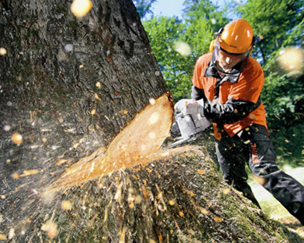 Tree Cutting-Henderson Tree Trimming and Tree Removal Services-We Offer Tree Trimming Services, Tree Removal, Tree Pruning, Tree Cutting, Residential and Commercial Tree Trimming Services, Storm Damage, Emergency Tree Removal, Land Clearing, Tree Companies, Tree Care Service, Stump Grinding, and we're the Best Tree Trimming Company Near You Guaranteed!