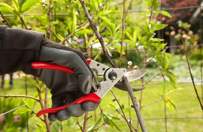 Tree Pruning-Henderson Tree Trimming and Tree Removal Services-We Offer Tree Trimming Services, Tree Removal, Tree Pruning, Tree Cutting, Residential and Commercial Tree Trimming Services, Storm Damage, Emergency Tree Removal, Land Clearing, Tree Companies, Tree Care Service, Stump Grinding, and we're the Best Tree Trimming Company Near You Guaranteed!