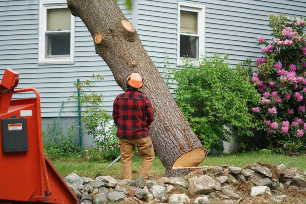 Tree Removal-Henderson Tree Trimming and Tree Removal Services-We Offer Tree Trimming Services, Tree Removal, Tree Pruning, Tree Cutting, Residential and Commercial Tree Trimming Services, Storm Damage, Emergency Tree Removal, Land Clearing, Tree Companies, Tree Care Service, Stump Grinding, and we're the Best Tree Trimming Company Near You Guaranteed!