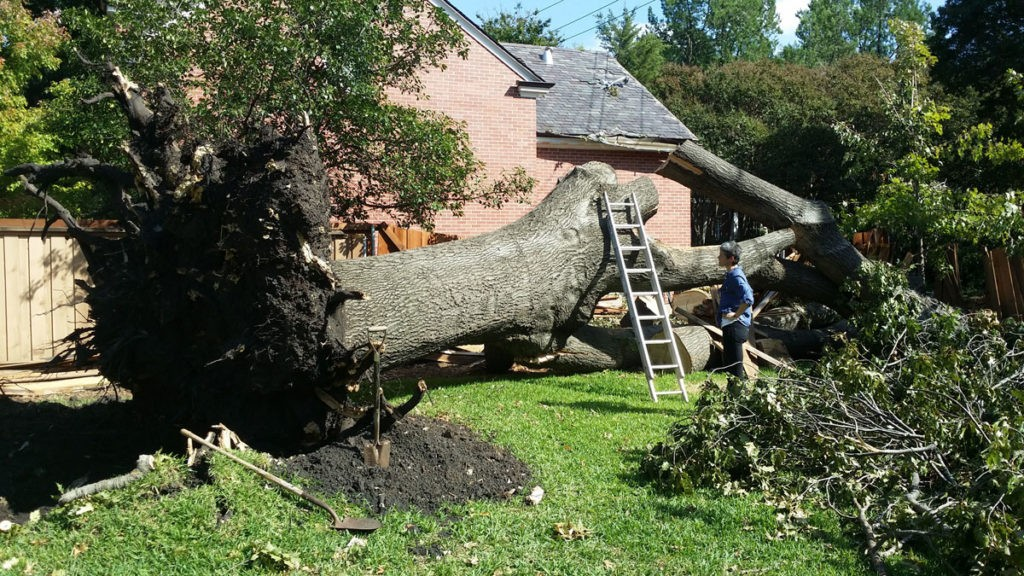 Silverado Ranch-Henderson Tree Trimming and Tree Removal Services-We Offer Tree Trimming Services, Tree Removal, Tree Pruning, Tree Cutting, Residential and Commercial Tree Trimming Services, Storm Damage, Emergency Tree Removal, Land Clearing, Tree Companies, Tree Care Service, Stump Grinding, and we're the Best Tree Trimming Company Near You Guaranteed!