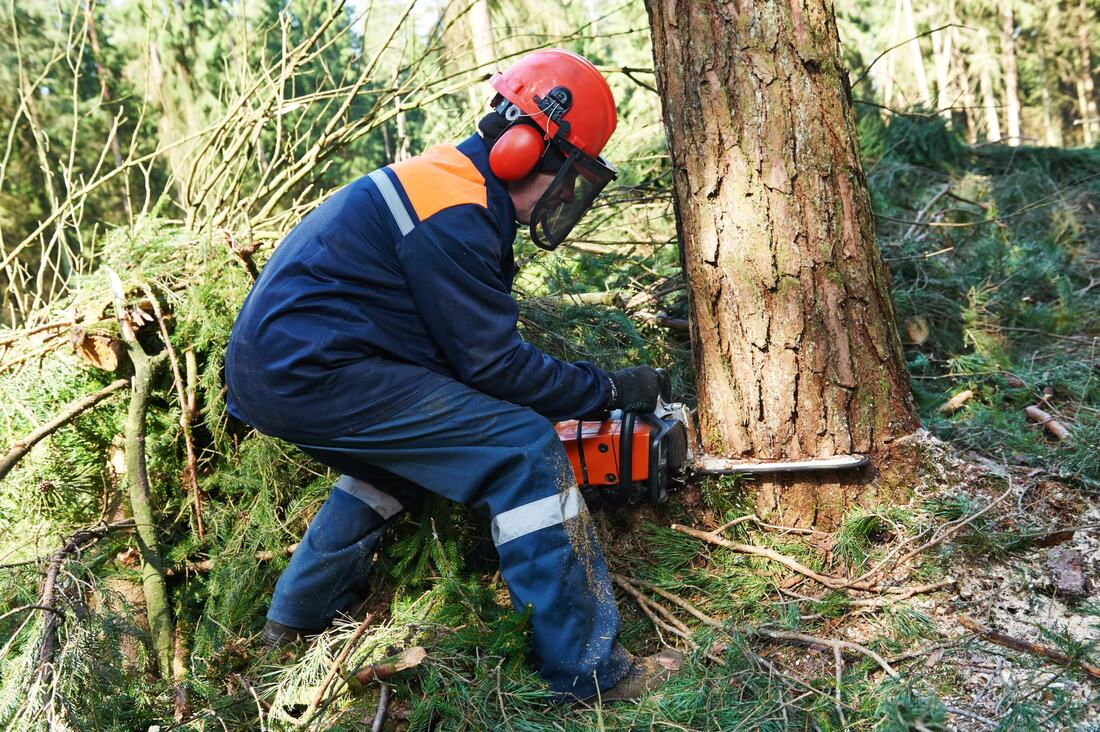 Sloan-Henderson Tree Trimming and Tree Removal Services-We Offer Tree Trimming Services, Tree Removal, Tree Pruning, Tree Cutting, Residential and Commercial Tree Trimming Services, Storm Damage, Emergency Tree Removal, Land Clearing, Tree Companies, Tree Care Service, Stump Grinding, and we're the Best Tree Trimming Company Near You Guaranteed!
